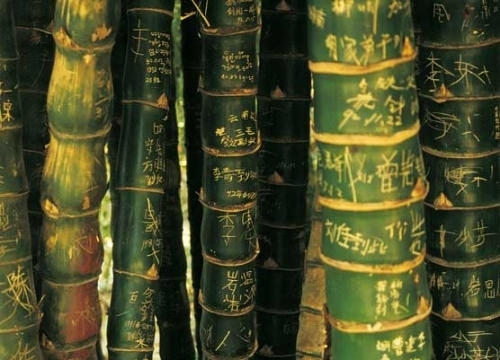 Bamboo Inscriptions