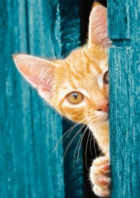 Greek Island Cat
