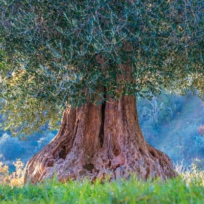 Trees  2022