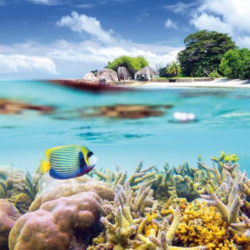 Dream Islands/Trauminseln 2022