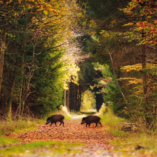 Forest Nature/Unser Wald 2022