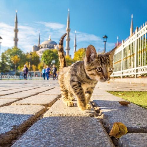 Cats at the Bosperous/Katzen am Bosporus 2022