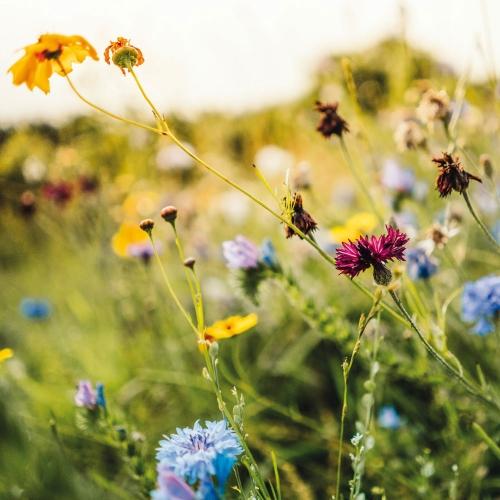 Flowers from the Fields/Blumen vom Feld 2022