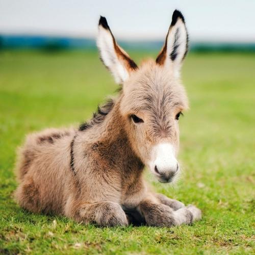 Donkeys/Esel 2022