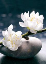 Zen Still-life