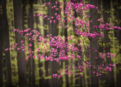 Zen Nature