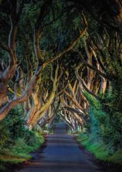 Tree Alleys II