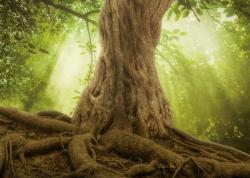 Magic Tree II