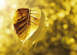 Bodhi - Gold