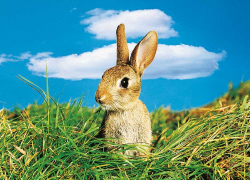 Mein Name ist Hase!