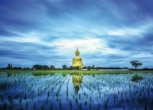 Buddha in the Fields