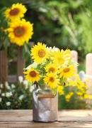 Yellow flowers in a rural garden
