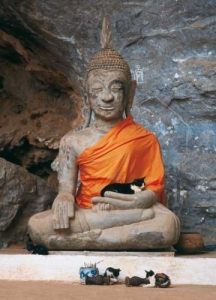 The Buddha and the cats