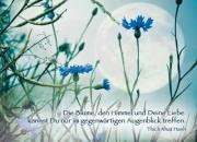 Die Blume, den Himmel...