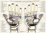 Hand Reflex Zones