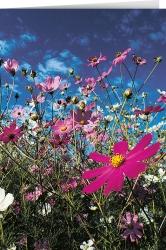 Die Blume, den Himmel ...