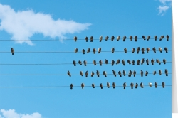 Alle Vögel?