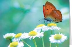 Der Schmetterling kennt.....