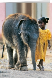 Indian Child with elephant