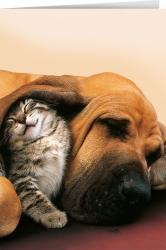Like cats ans dogs