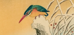 Ohara Koson - Kingfisher on Snowy Stump