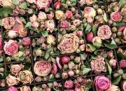 Postkartenset »Blumen«