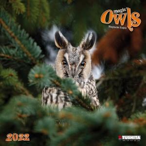 Magic Owls 2022