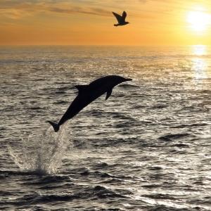 Dolphins/Delfine 2022