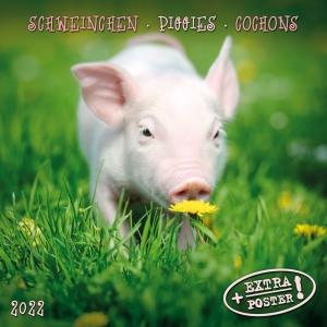 Piggies/Schweinchen 2022