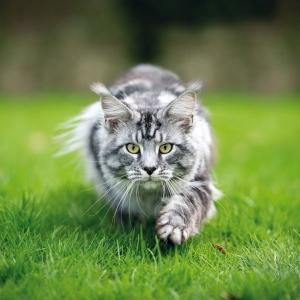 Cats/Katzen 2022