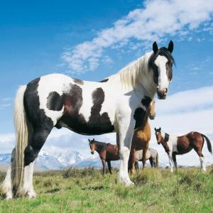 Horses/Pferde  2022