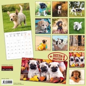 Puppy Dogs/Hundewelpen 2022