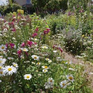 Cottage Garden/Bauerngarten 2022