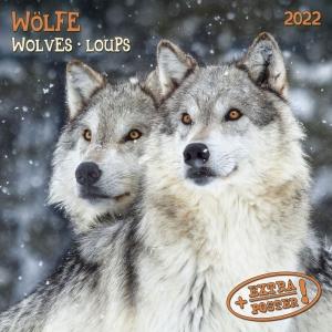 Wolves/Wölfe 2022