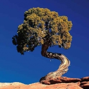 ZEN in the art of NATURE
