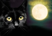 Ob eine schwarze Katze ...