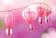 Herz - Blumen
