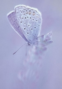 Happiness is a Butterfly ...