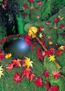 Im Zen Garten