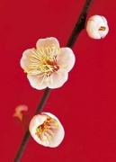 Zen-Blossom